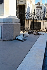 The cats of Recoleta