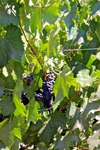 Wine-tasting at Di Martini Winery
