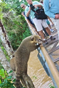 Iguazu Falls Day 1 11