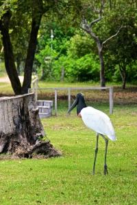 Pantanal 1 (3)