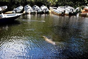 Pantanal 2 (1)