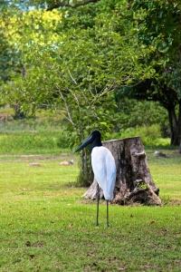 Pantanal 2 (3)