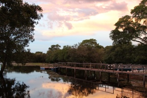Pantanal 11