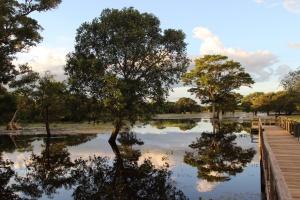 Pantanal 13
