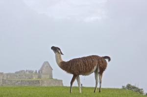 Mchu Picchu Day 2 9
