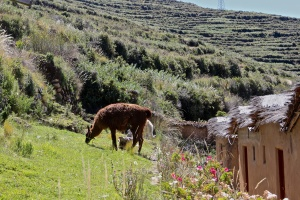 Titicaca Day 2 25
