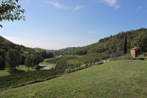 Kozlovic winery