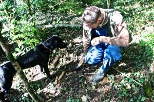 Truffle Hunting in the Motovun Forest
