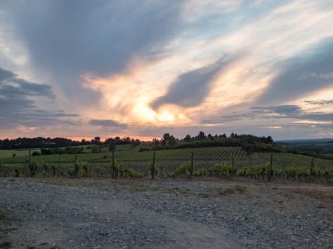 O'Vineyards-Carcassonne-12