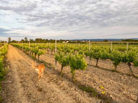 O'Vineyards-Carcassonne-4