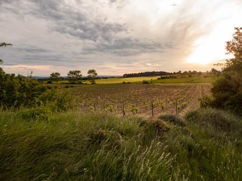 O'Vineyards-Carcassonne-6