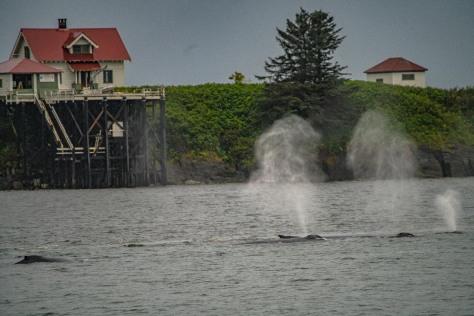 Juneau-131