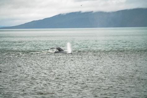 Juneau-200
