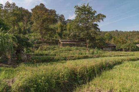 chiang-mai-569