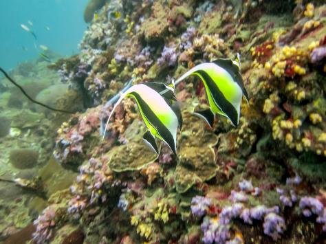 Phi Phi Dive Trip-1