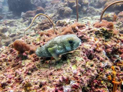 Phi Phi Dive Trip-13