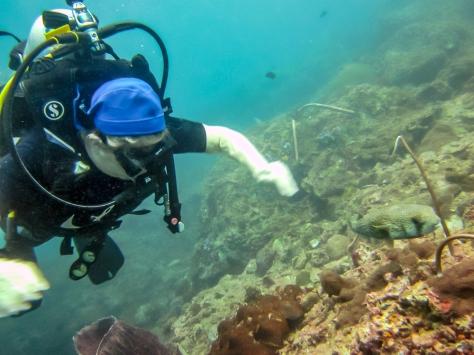 Phi Phi Dive Trip-14