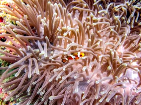 Phi Phi Dive Trip-17