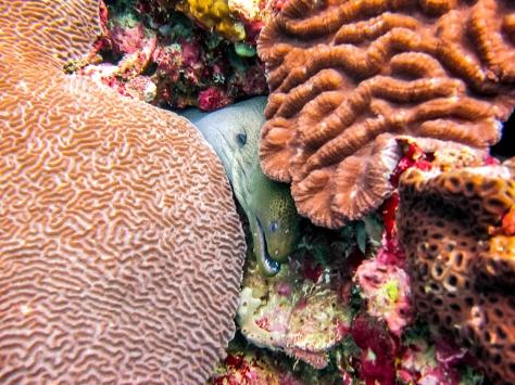 Phi Phi Dive Trip-19
