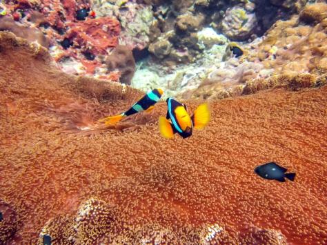 Phi Phi Dive Trip-20