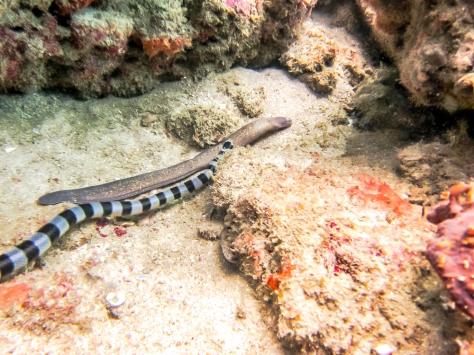 Phi Phi Dive Trip-28