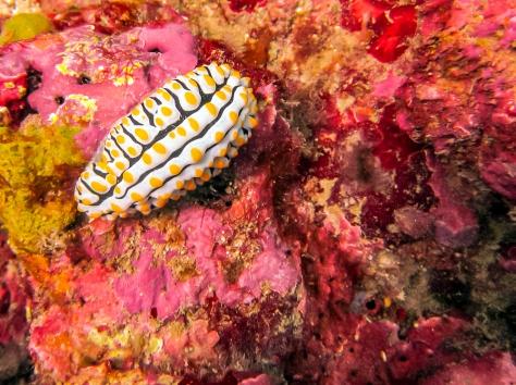 Phi Phi Dive Trip-30