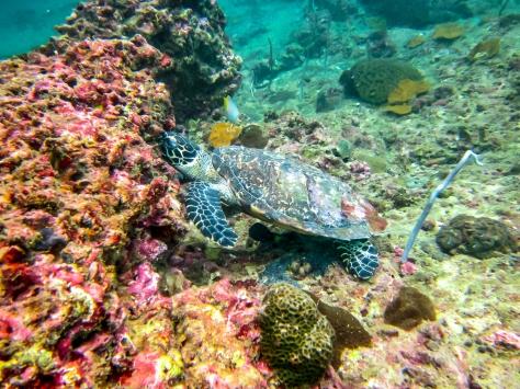 Phi Phi Dive Trip-31