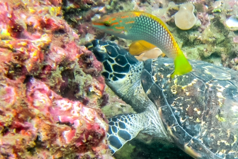 Phi Phi Dive Trip-33