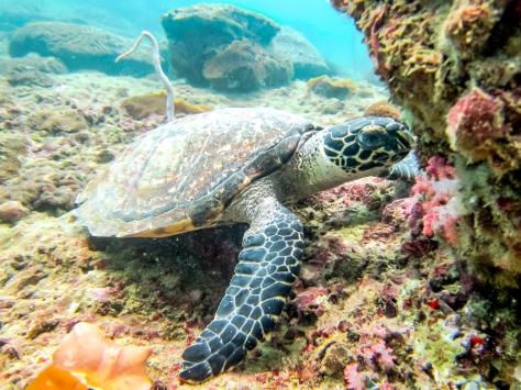 Phi Phi Dive Trip-34