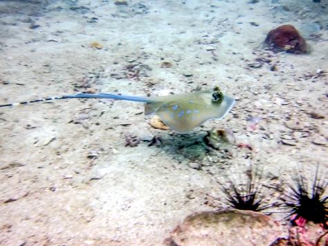 Phi Phi Dive Trip-47