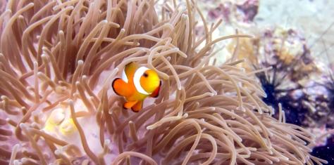 Phi Phi Dive Trip-48