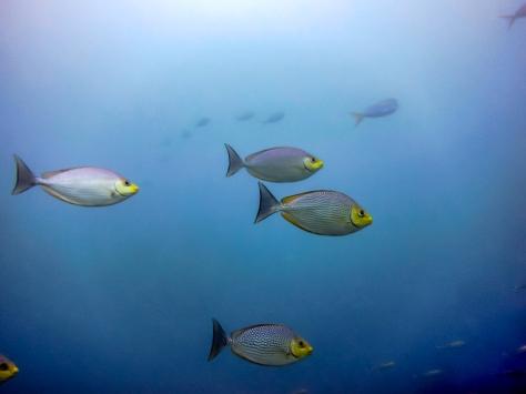 Phi Phi Dive Trip-52