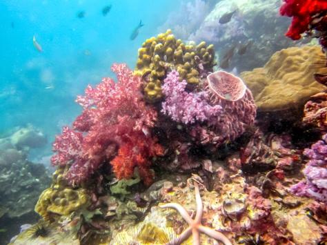 Phi Phi Dive Trip-56