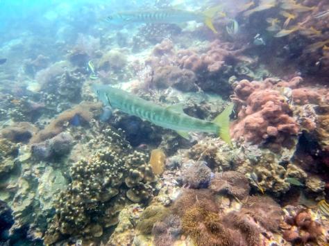 Phi Phi Dive Trip-59