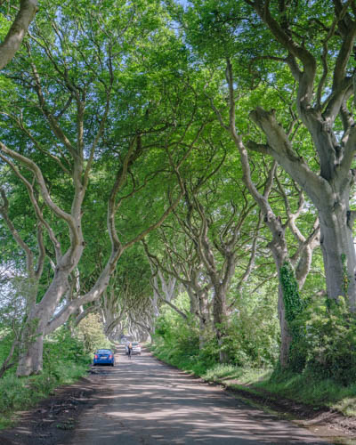 Dark Hedges from Game of Thrones-5