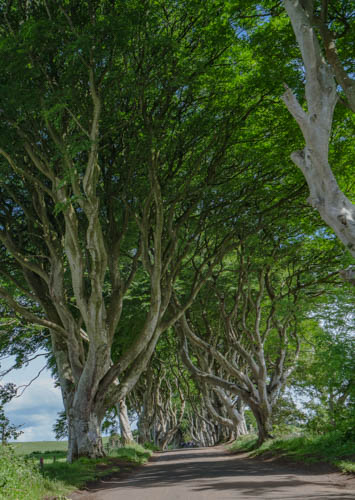 Dark Hedges from Game of Thrones-7