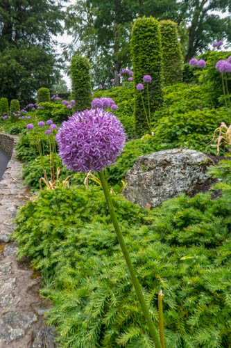 Blarney Castle-17