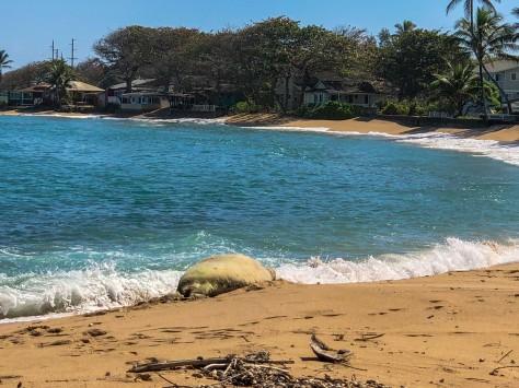 Honolulu-283