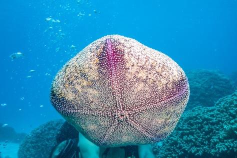 Bora Bora-111