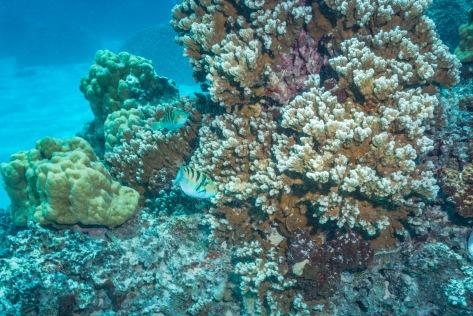 Bora Bora-121