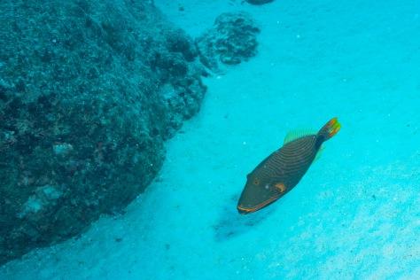 Bora Bora-22.jpg