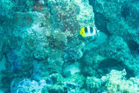 Bora Bora-26