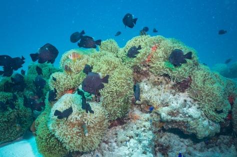Bora Bora-34