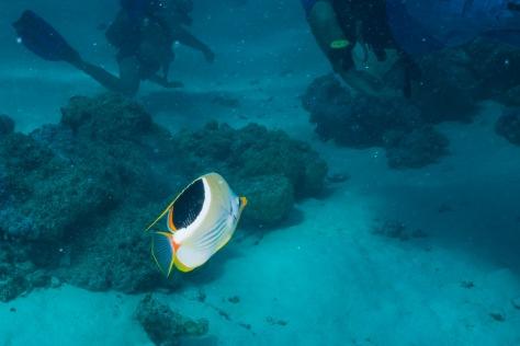 Bora Bora-44