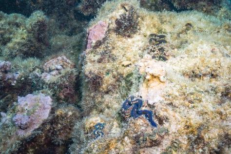 Bora Bora-54