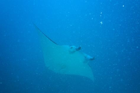 Bora Bora-77