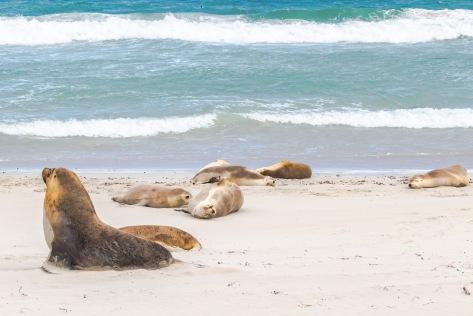 Kangaroo Island-363