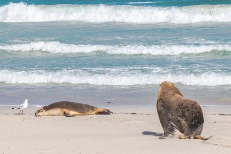 Kangaroo Island-408