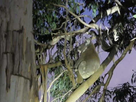 Kangaroo Island-490