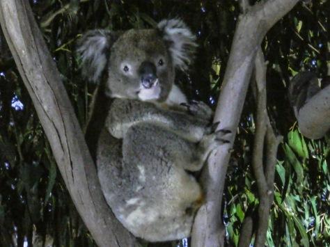 Kangaroo Island-495